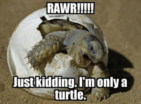20 Of The Most Hilarious Memes Of Animals