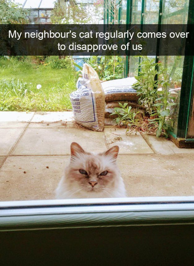 30 Hilarious Reasons Why We Love Cats