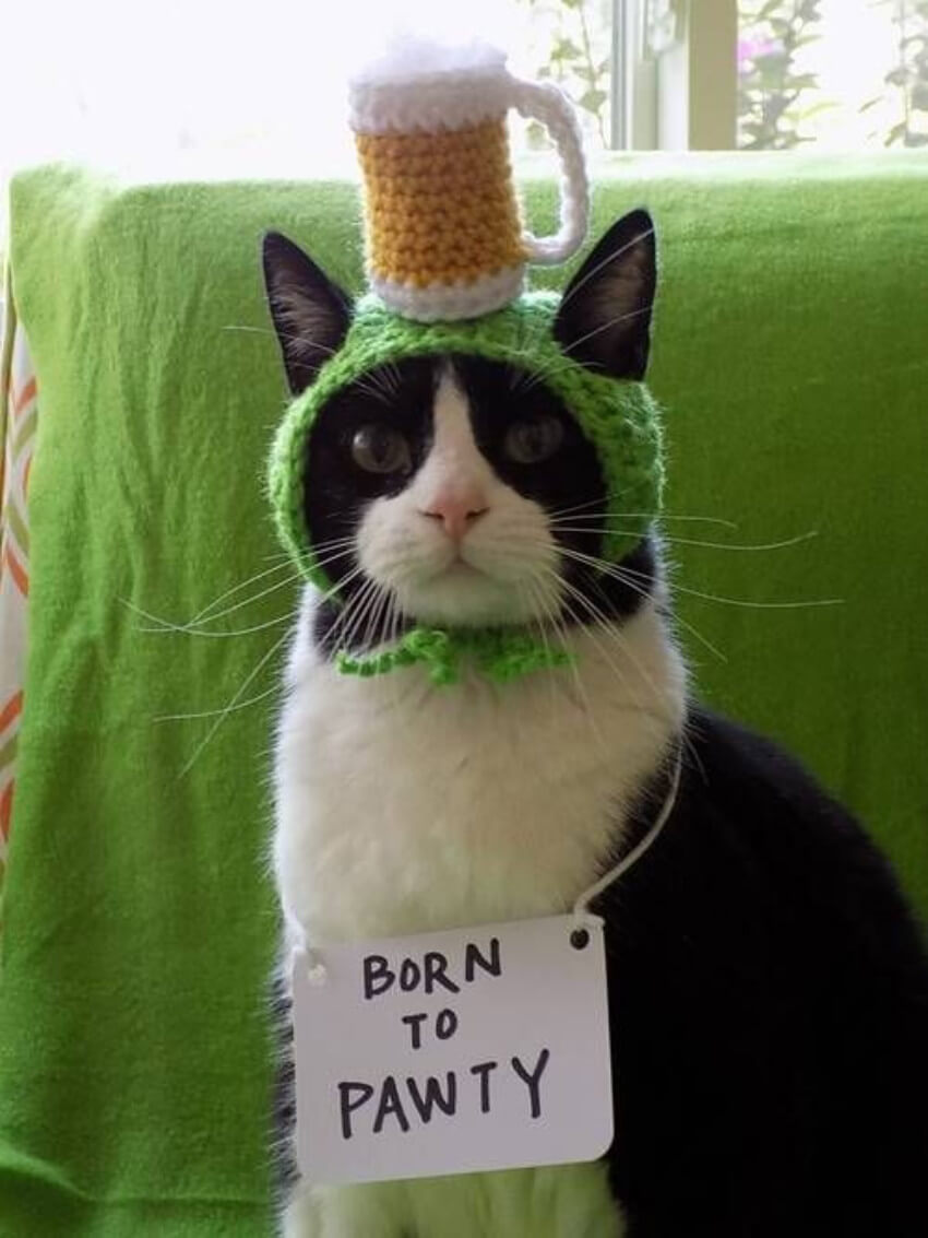 25 Animals Dressed Up For St. Patrick's Day