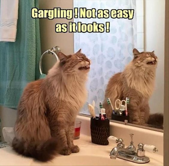 30 Of the Funniest Cat Pictures Ever!