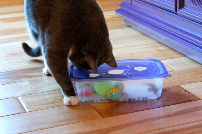 10 Meow Worthy DIYs For Cats